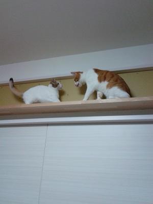 キャットウォークで遊ぶ猫