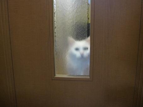 作業を見守る猫