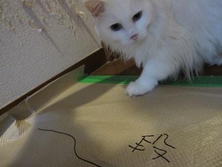 マンションのクロスで爪をとぐ猫